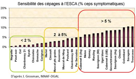 Les différents cépages et importance de l'expression des symptômes de l'esca