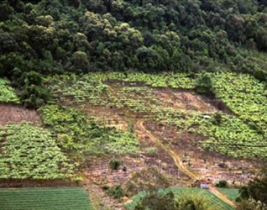 Les maladies du bois au Brésil